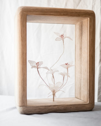 Paper flowers showcased in a home decor bespoke wooden frame open from both sides.